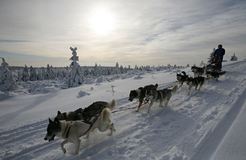 Šediváčkův long 2013 – extreme dogsled race