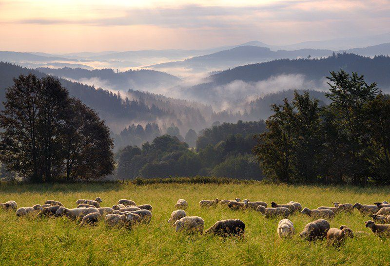 Discover the magic of Czech regions