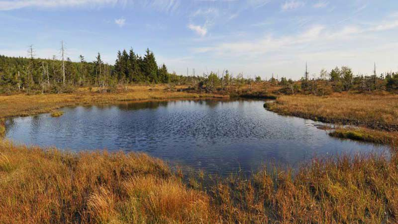 Jizera Mountains - peat bog