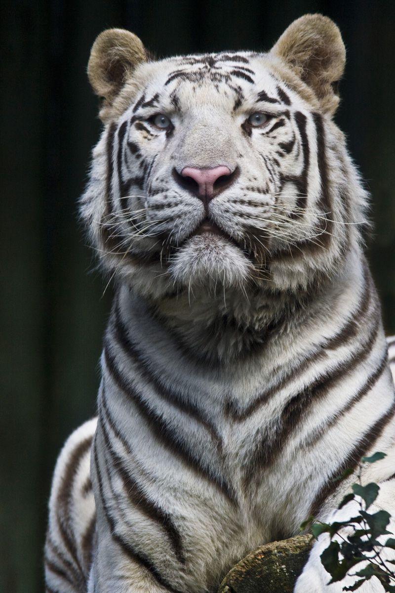 Либерец - зоопарк