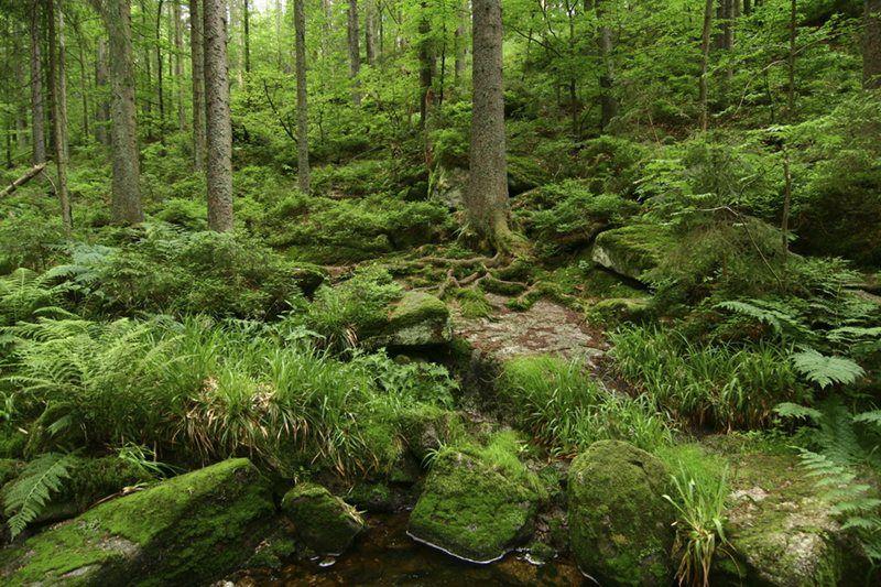 Boubín Forest