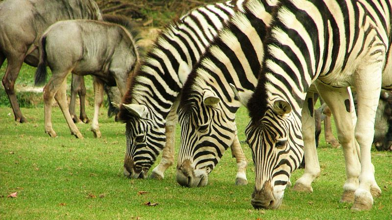 Зоопарк вДвур Кралове над Лабем