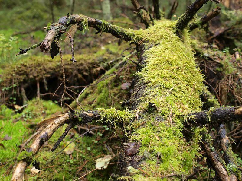 Žofín Forest