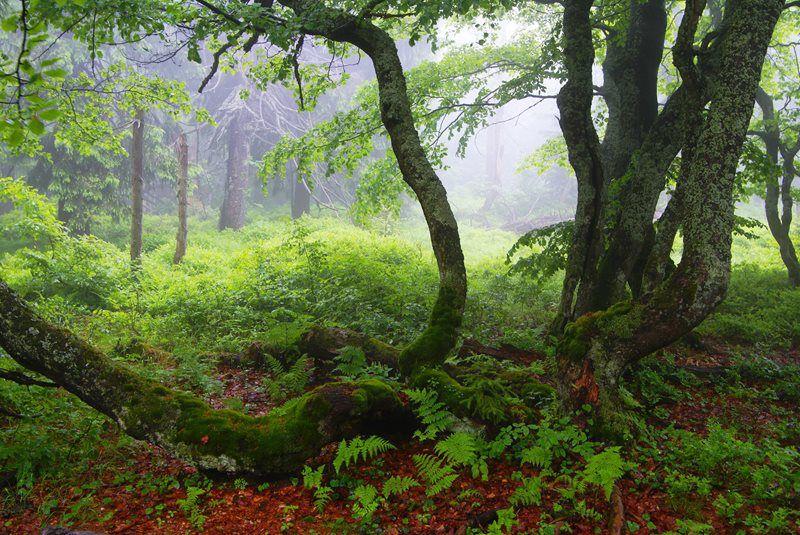 Dvorský Forest in Krkonoše