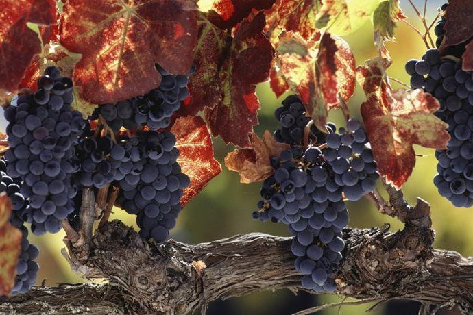 Vintage or, autumn has arrived – have a sip!