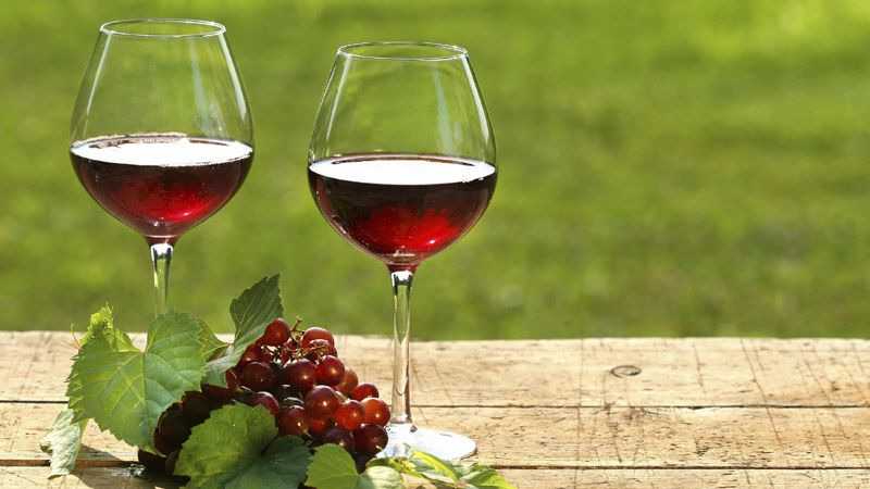 Виноградарство У Каплички