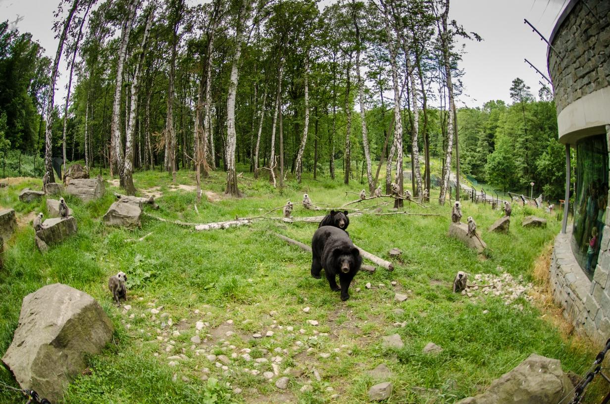 Le zoo et le Dinoparc d'Ostrava