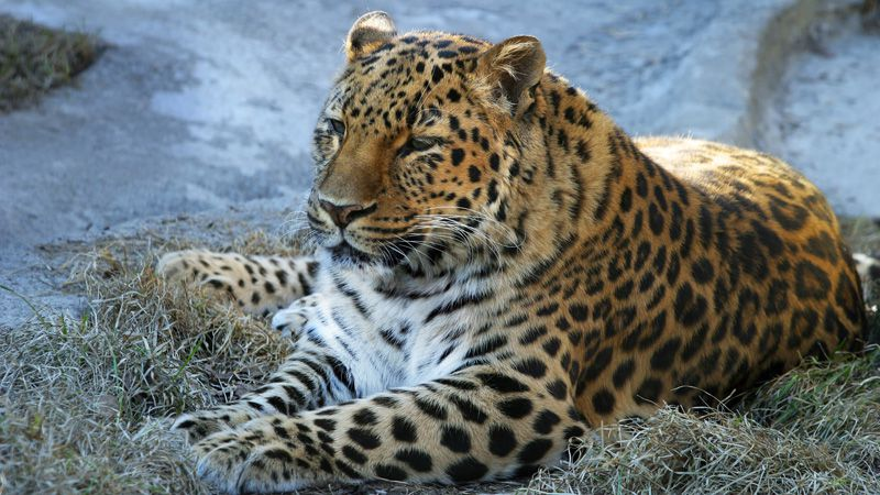 Jihlava – Zoo