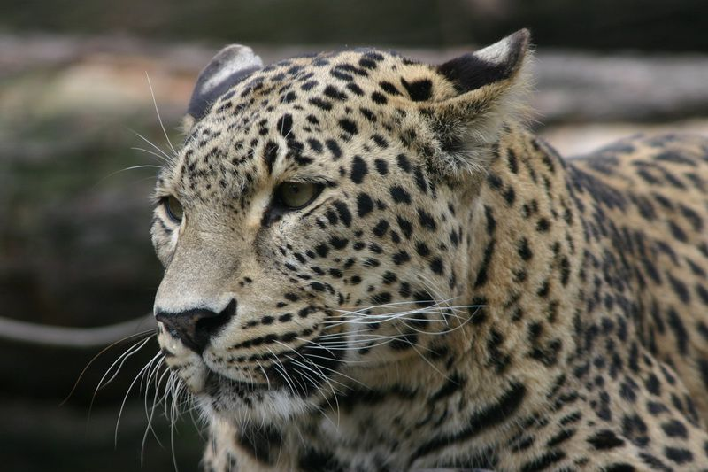 Jihlava Zoo