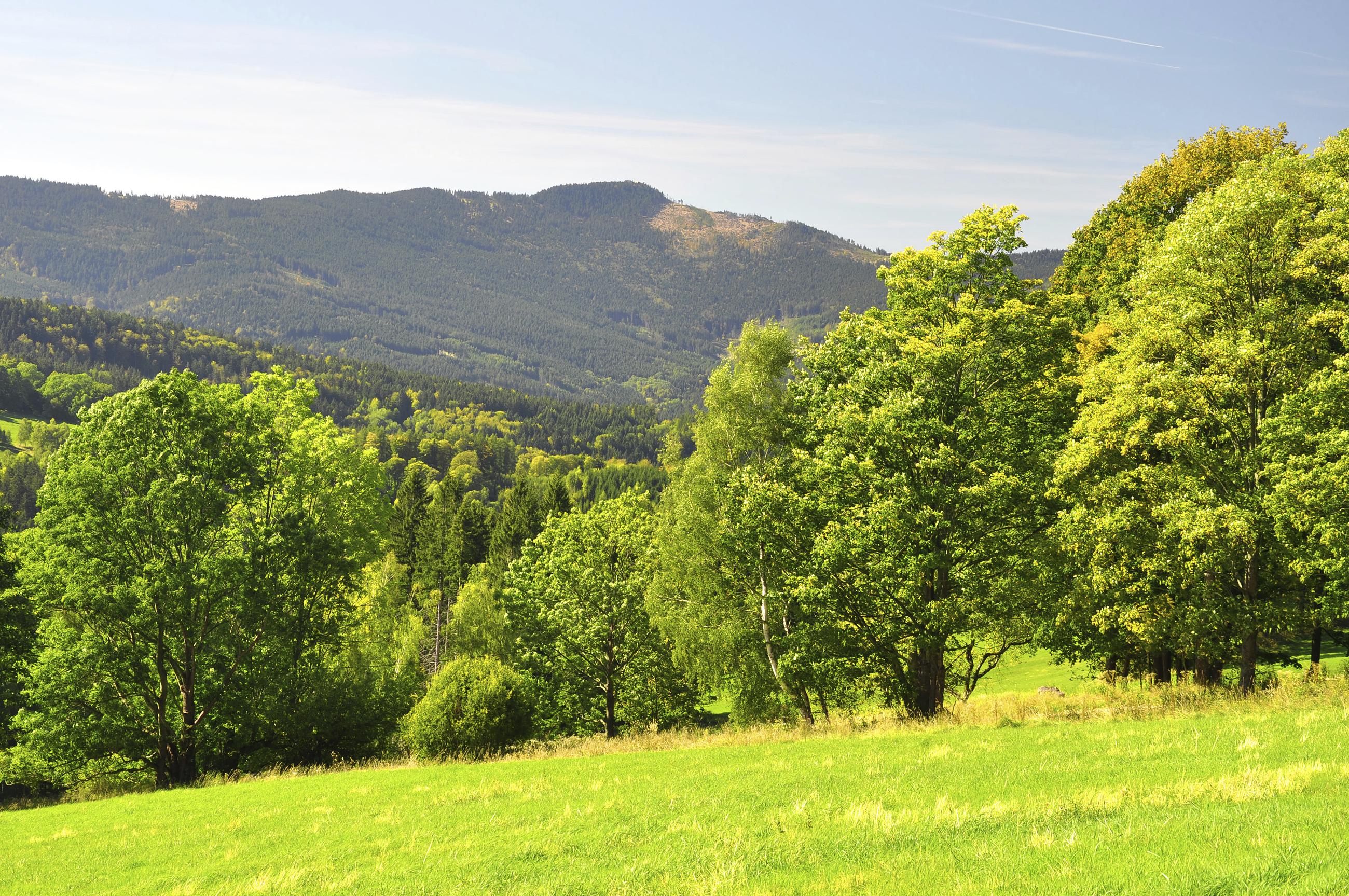 Šumava in the summer