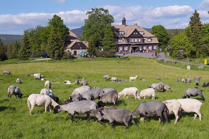 Jizera Mountains - Šámal Cottage